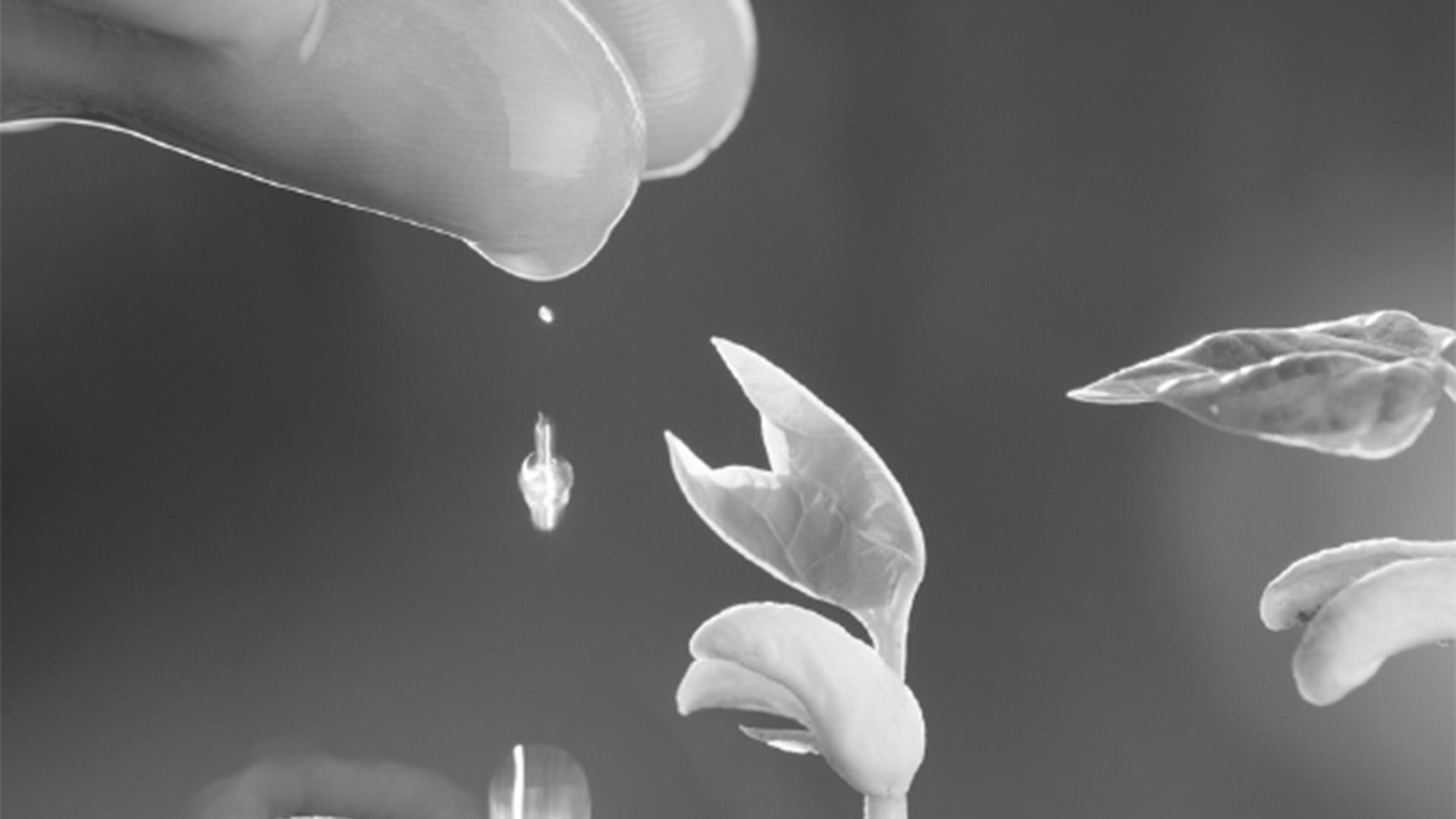 Il seme della Parola